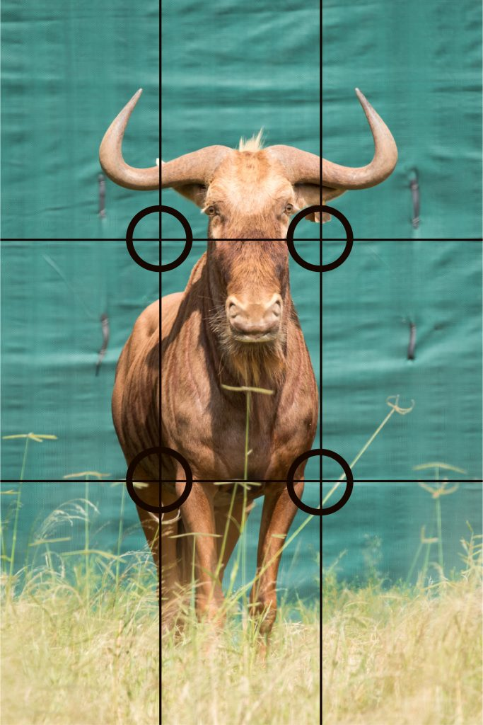 rule of thirds wildlife photography