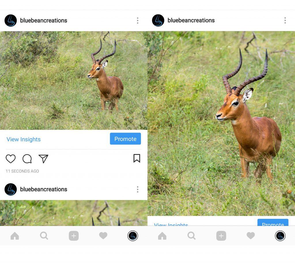 instagram portrait landscape